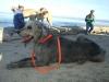 Annual Monterey Walk January 19, 2013