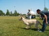 Rafiki - lure coursing