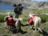 Humphrey Basin Backpacking July 2013