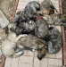 puppy-pile