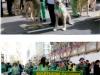 st-patrick_s-day-parade355
