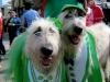 San Francisco St Patricks parade 2013