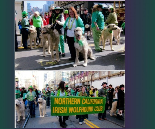 St Patrick_s Day Parade355 A